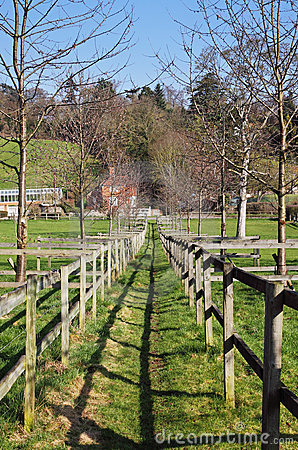 Fenced Footpath through an English Meadow