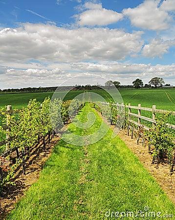 Fenced Footpath between fields