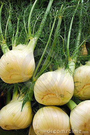 Free Fennel Stock Photos - 7185903