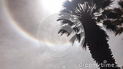 Fenomeni di alone di Sun stock footage