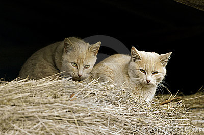 Feral Farm Cats
