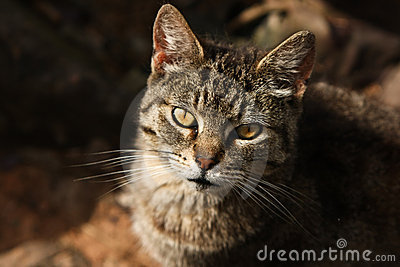 Feral stray cat in the sunlight