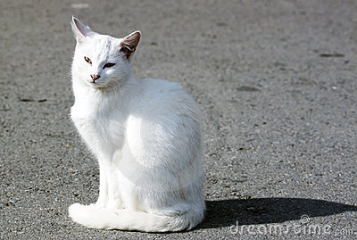Feral white cat - RAW format