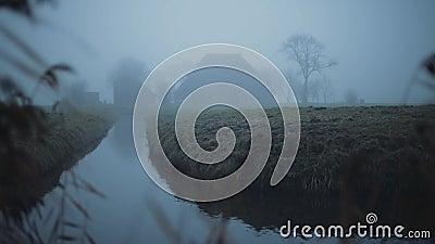 Ferme néerlandaise brumeuse sur un paysage vert et humide de pré pendant l'hiver Avec le roseau dans le premier plan clips vidéos