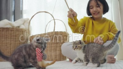 Fermez Joli enfant asiatique jouant avec des chatons en mouvement lent banque de vidéos