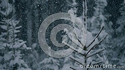 Fermez-vous de l'arbre avec la neige banque de vidéos