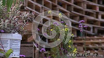 Fermo immagine di flora, circondato da pallet impilati archivi video