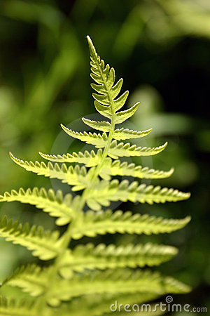 Free Fern Royalty Free Stock Image - 10956