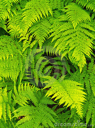 Free Fern Background Royalty Free Stock Image - 5697786