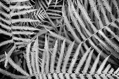Fern Background Texture