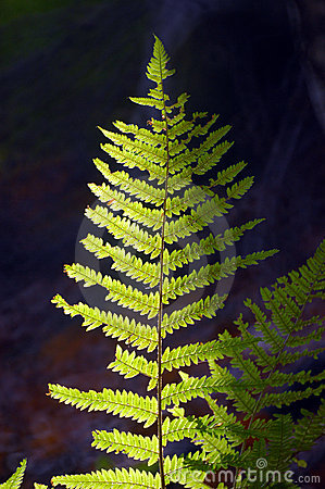 Fern on a dark background