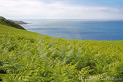 Fern (Dryopteris filix-mas) on the coast
