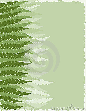 Fern Fronds Background