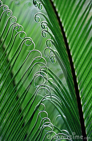 Free Fern In Brazil Royalty Free Stock Photography - 698057