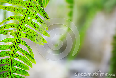 Fern in jungle