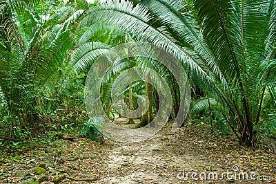 Fern-jungle