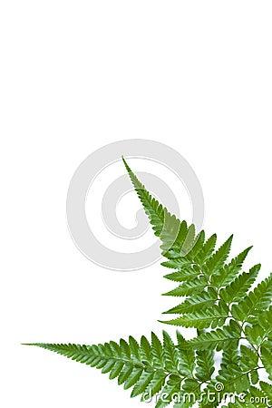 Free Fern Leaf 01 Stock Image - 14682591