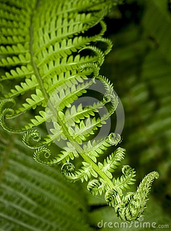 Free Fern Leaf Stock Photos - 103116493