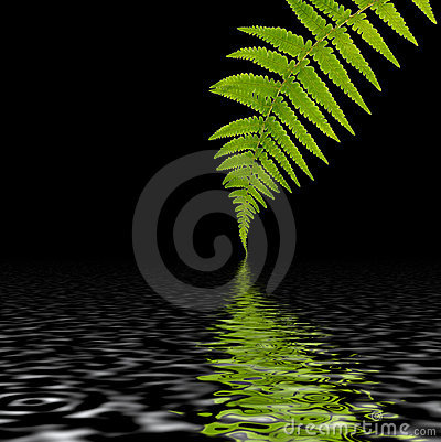 Fern Leaf Abstract