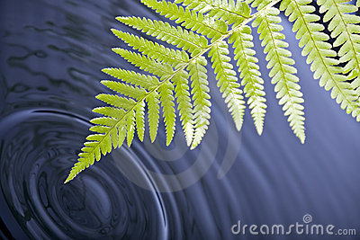 Fern leaf with water ripples
