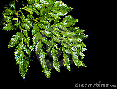 Fern leave with water drops