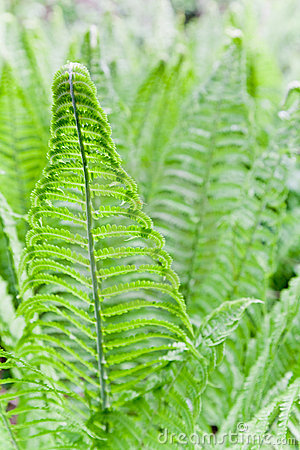 Fern Leaves Background