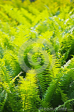 Fern leaves close-up