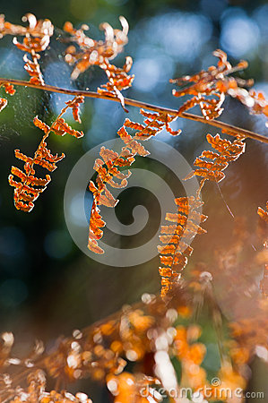 Fern leaves in forest