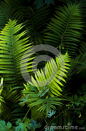 Free Fern Leaves On A Dark Background Royalty Free Stock Photos - 68788418