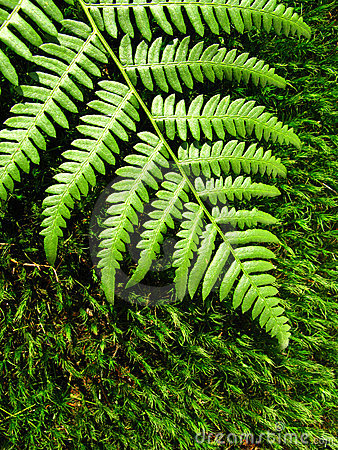 Free Fern Moss On Royalty Free Stock Image - 11000726