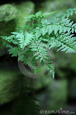 Free Fern On Old Wall Stock Photography - 10226332