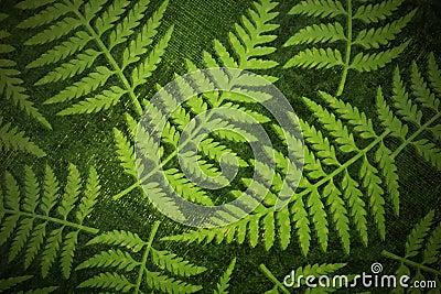 Fern paper background