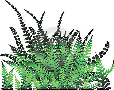 Fern plant - Vector