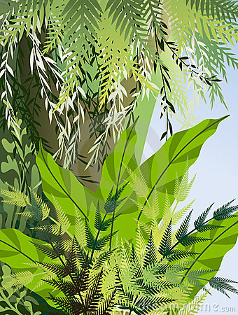 Fern thickets in the jungle