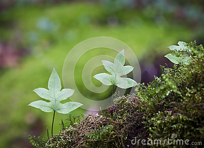 Fern in tropical mountain  forest