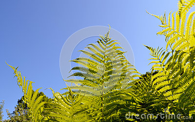 Fern verdant twig leaves on background of blue sky