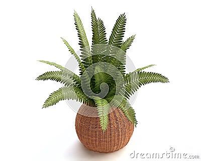 Fern in a Woven Flowerpot