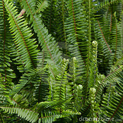 Free Ferns Stock Image - 16248031