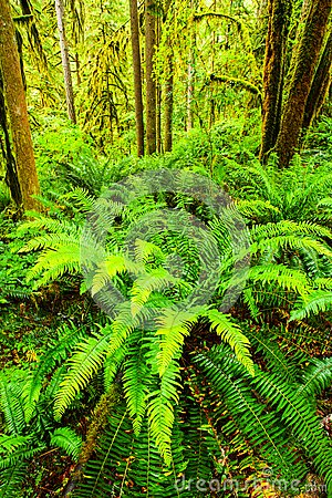 Free Ferns Royalty Free Stock Photos - 48367648