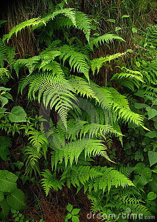 Free Ferns Royalty Free Stock Photo - 9676045
