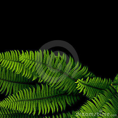Free Ferns Background Royalty Free Stock Images - 14605879