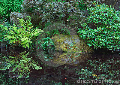 Ferns, Japanese Garden