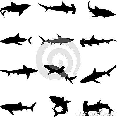 Ferocious deep-sea sharks