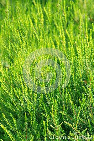 Fertile green vegetation