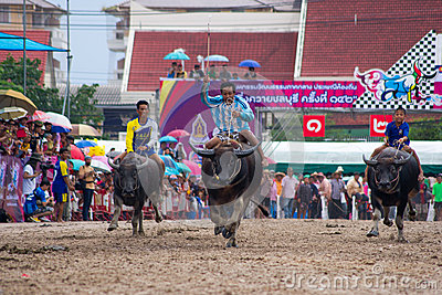 Festival Buffalo racing Editorial Stock Photo