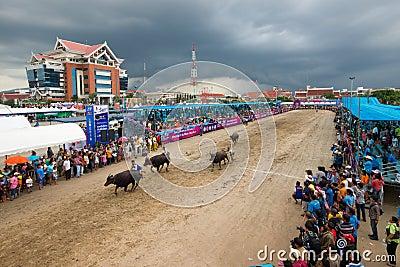 Festival Buffalo racing Editorial Stock Image