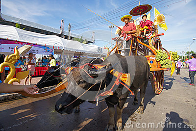 Festival Buffalo racing Editorial Stock Image
