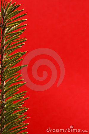Festive fir background