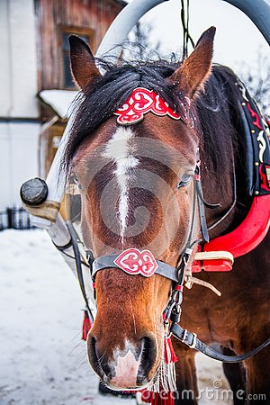 Free Festive Horse At Work Stock Images - 133114084
