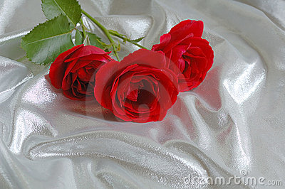 Festive silk background with red roses